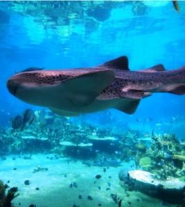 Sea World @ Sea World | Main Beach | Queensland | Australia
